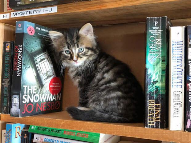 Милая хитрость книжного магазина привлекла в него сотни людей!