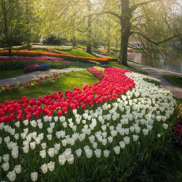 Фотограф показал, как выглядит самый красивый цветочный парк в мире без посетителей