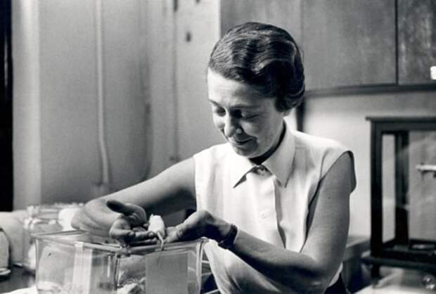 Самый экстравагантный нобелевский лауреат: Как Рита Леви-Монтальчини дожила до 103 лет, не утратив жизнелюбия