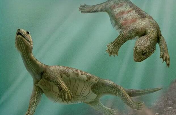Видео: Какие тайны кроются в эволюции черепах, и кем были их прародители