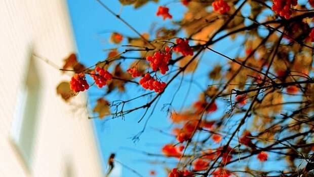 Тепло и слишком ветрено. Прогноз погоды в Алтайском крае на 26 октября