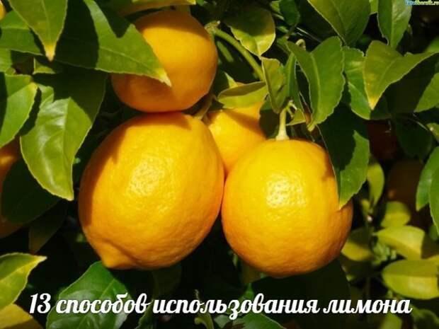 13 способов использования лимона.
