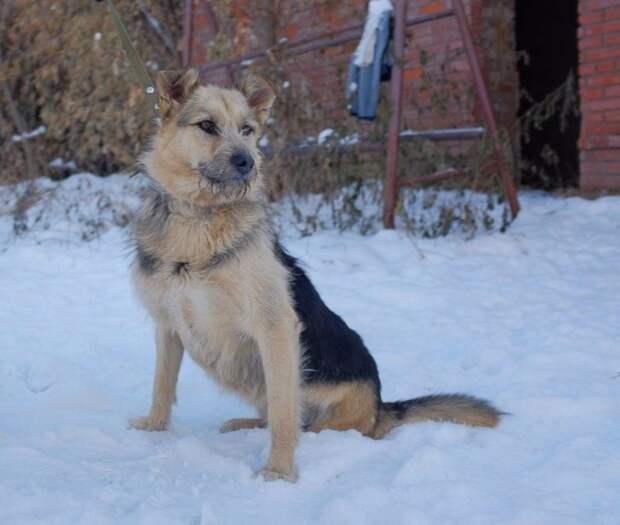 Худая собака без лапы месяцами скиталась по городу инвалид, лапа, собака, терьер