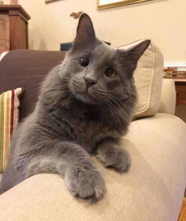 Котенка выбросили из-за косоглазия, а теперь он— знаменитость