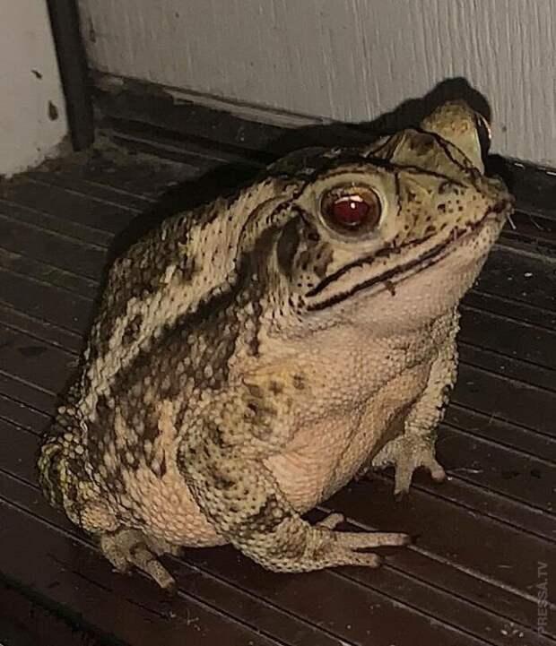 История одной жабы