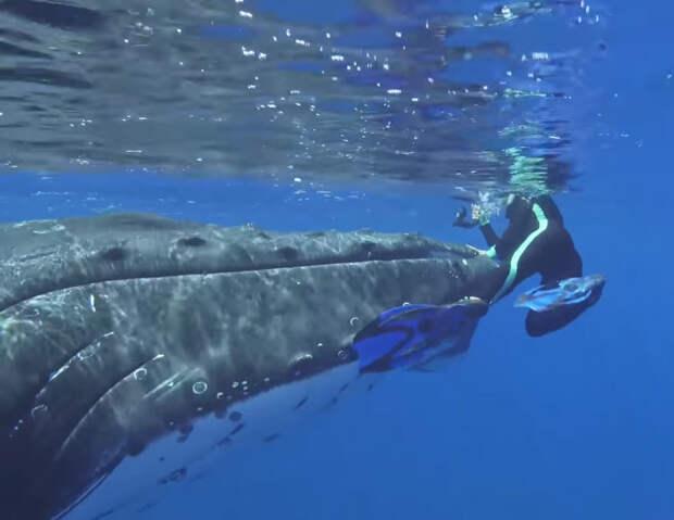 Акула начала охоту на человека, но хищник не ожидал появления кита-спасителя