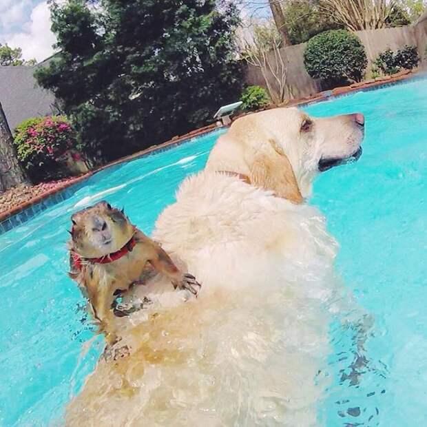 Летом можно поплавать в бассейне животные, луговые собачки