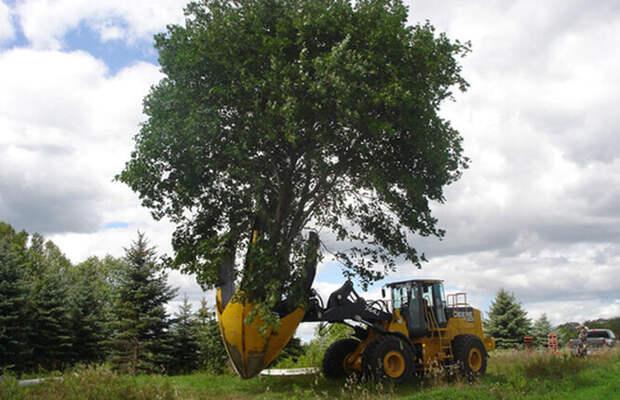 Пересадчик деревьев Dutchman Truck Spade
