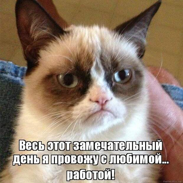 Умерла Grumpy Cat — самая сердитая кошка в мире