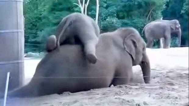 Слонята, которые решили немного пошалить — позитивное видео