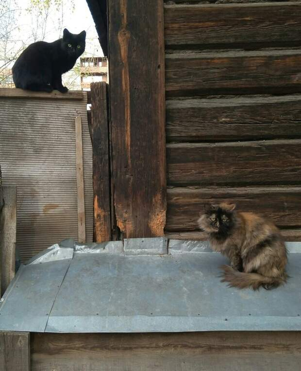 Когда не досталось места на заборе город, домашние животные, забор, кот, кошка, село, улица, эстетика