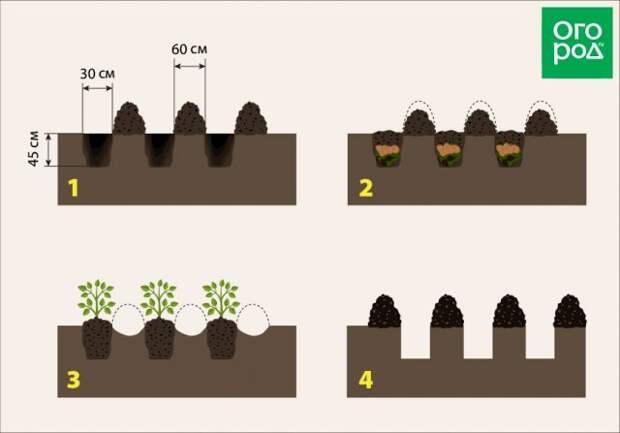 Схема посадки картофеля по Квартальновой