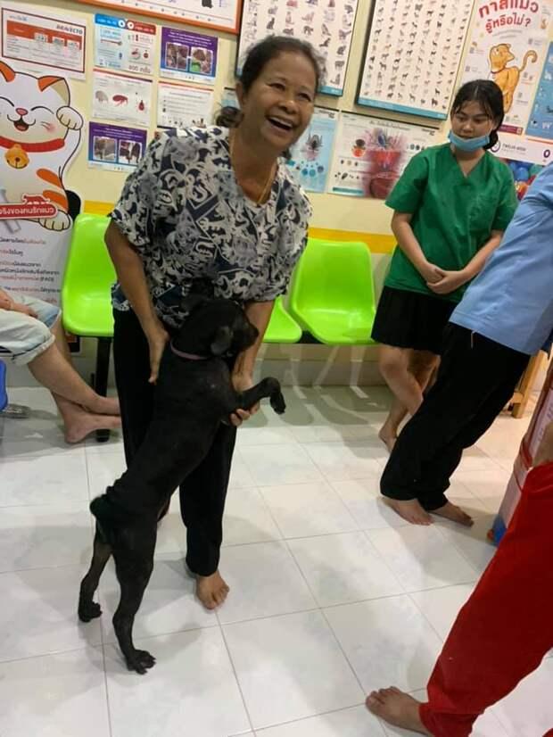 Потерявшийся пес пришел в ветеринарную клинику, чтобы его вернули домой