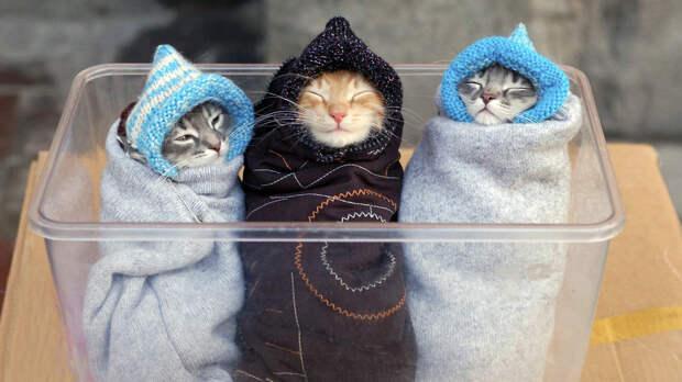 Картинки котят: смешные