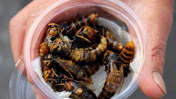 Жареные осы — необычное японское блюдо