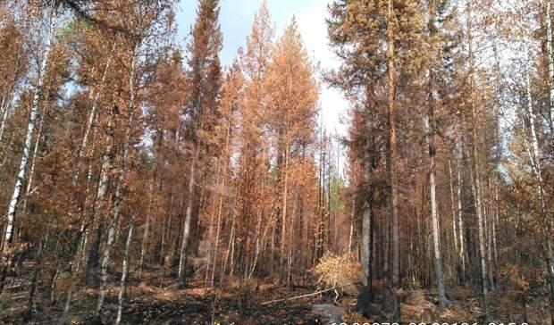 Минприроды Карелии призывает жителей не посещать леса, пострадавшие от пожаров