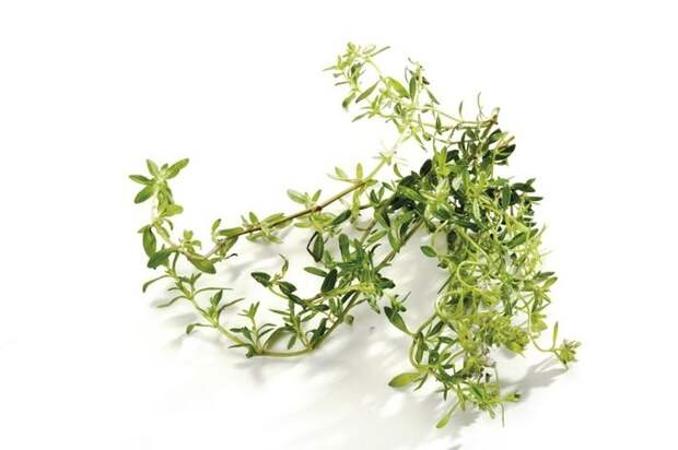 20 фактов о влиянии трав и растений на наше самочувствие