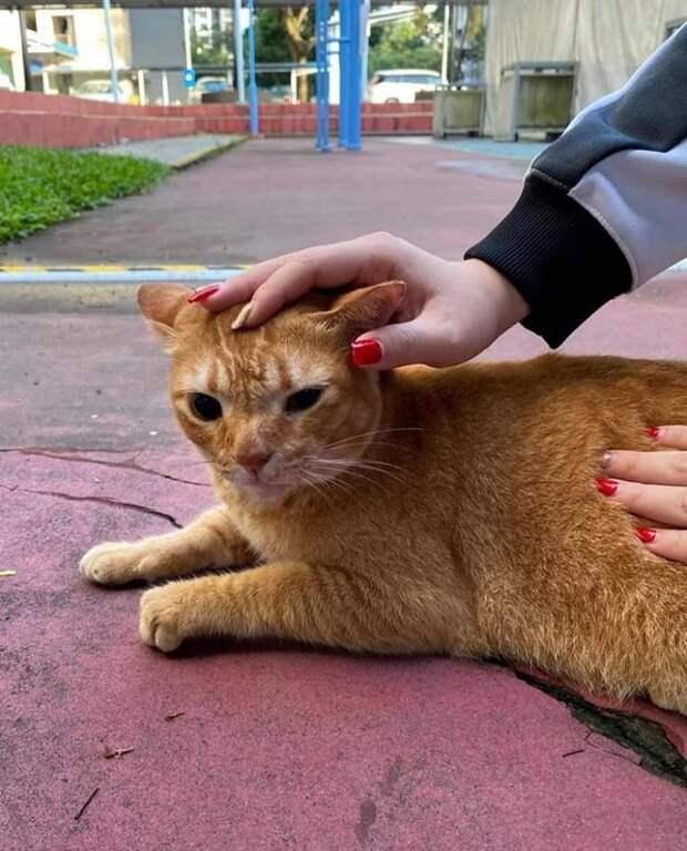 Рыжий котик, который пришел на вакцинацию, стал новым мемом