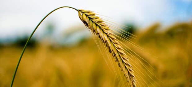 Экс-министр сельского хозяйства Ткачев оказался бенефициарным владельцем крупнейшего агрохолдинга