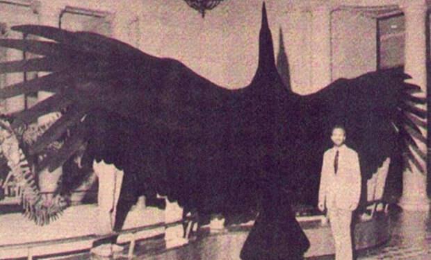 6 миллионов лет назад над Землей летала самая большая птица в истории. Размах ее крыльев превышал 6 метров