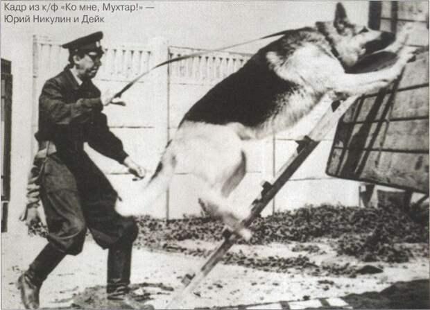 Самые популярные породы собак в СССР