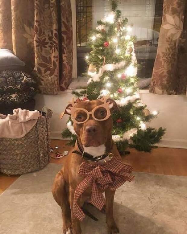 Пес возле елки
