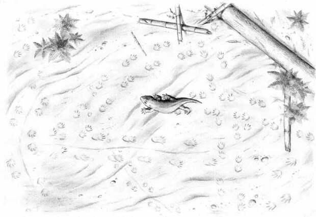 Следы на потолке палеонтология, следы, наука, интересное, копипаста, elementyru, длиннопост