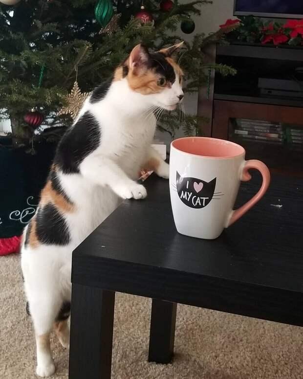 13. Кошке тоже нужен утренний латте Любовь, животные, коты, кошки, люди, милота, питомцы