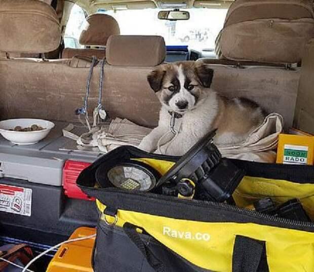 Щенок в машине