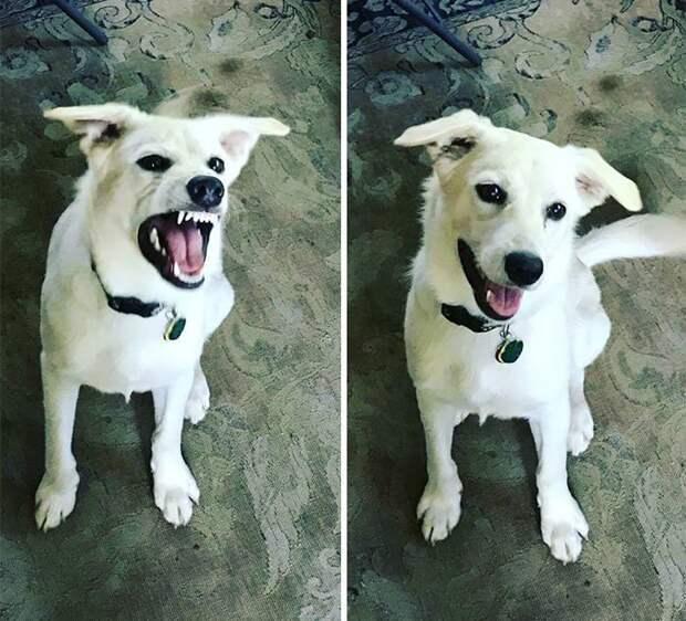 17 доказательств, что доброе слово приятно только собаке, а кошкам — все равно до и после, доброе слово, домшний питомец, животные, кошка, собака