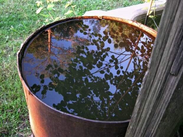 Как предотвратить цветение воды в бочке на даче
