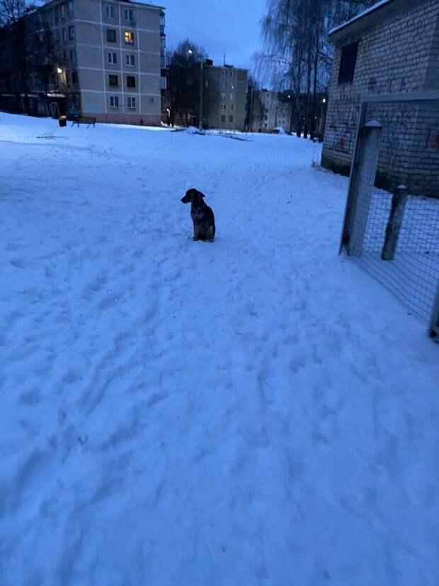 Ледяной дождь лил как из ведра, а бедный песик сидел поджав лапки, ему некуда было идти
