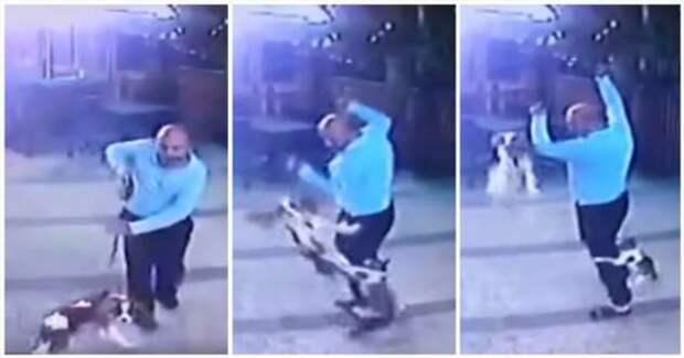 Боевая кошка напала на мужчину с собакой (1 фото + 1 видео)
