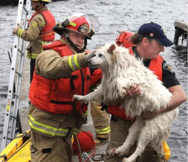 Животные, которым люди пришли на помощь