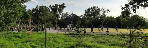 Деревья начали засыхать в парке «Южный» в Алматы из-за сломанной системы полива