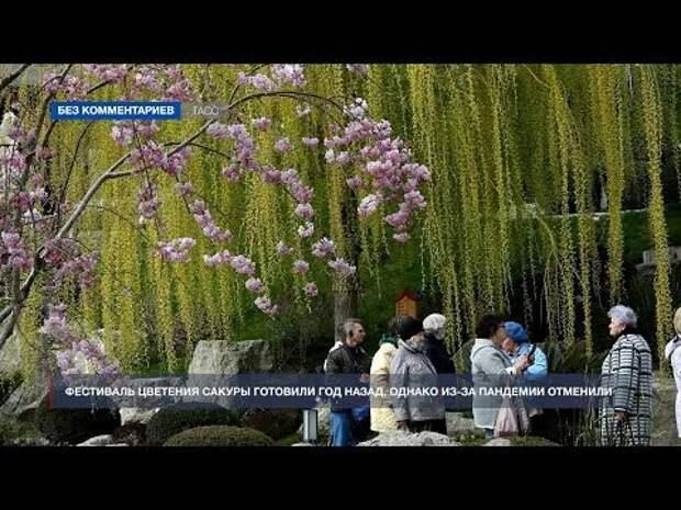 В Ялте с 10 по 18 апреля прошёл фестиваль «Цветущая сакура»