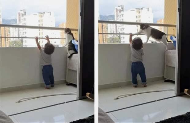 Ребенок пытался вылезти с балкона, но вмешался кот