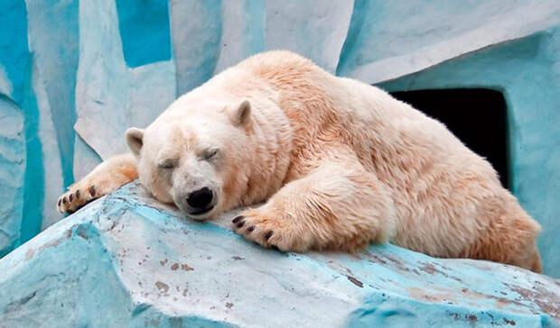 В зоопарке Милуоки усыпили самого старую белую медведицу Северной Америки