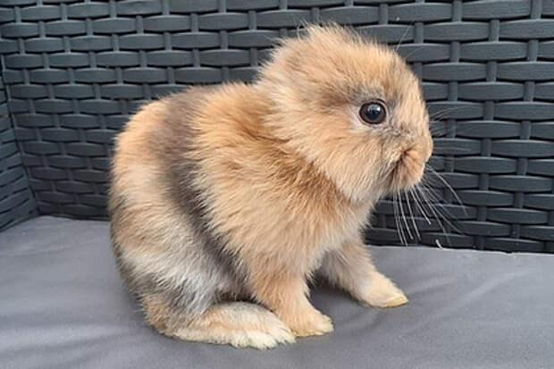 В Ирландии появился самый необычный кролик в мире