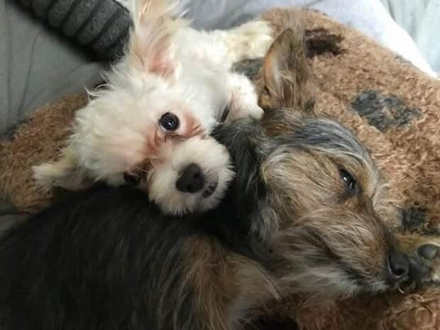 Собака или кролик? Брошенная больная девочка ковыляла по полю совершенно одна