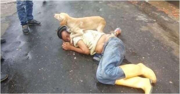 Пёс не дал в обиду своего пьяного хозяина алкоголь, видео, дуг человека, животные, колумбия, прикол, пьяный, собака