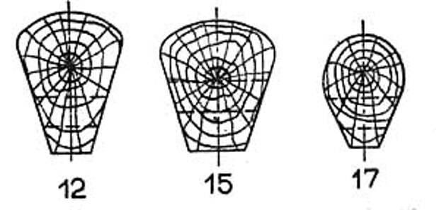 Поперечные сечения 12, 15, и 17-ого шпангоутов вблизи килевой доски.