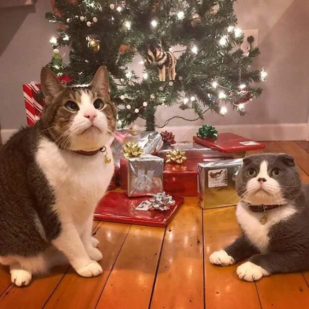 Косоглазый котик получил необычный подарок