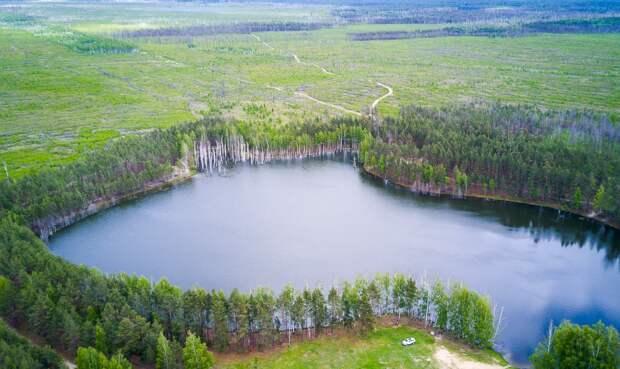 Заказник в Таракановском лесничестве расширят до 432 гектаров