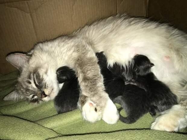 Беременная кошка скромно терлась у порога людей, чтобы ей помогли родить беременные животные, история, история спасения, коты, кошки, помощь животным, трогательно