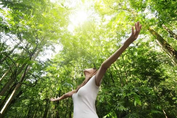 У каких деревьев можно напитаться энергией