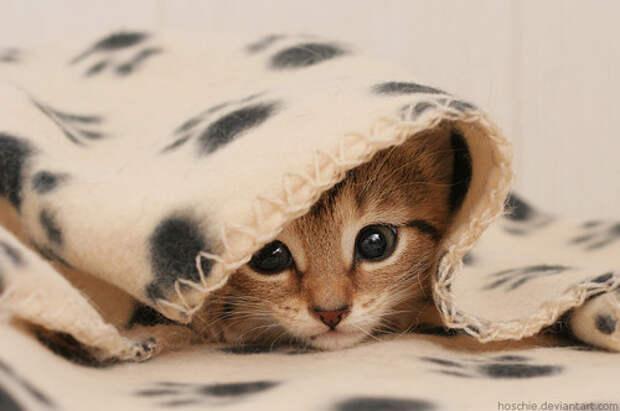 Милые котейки!!! Фото + гифки. Обсуждение на LiveInternet ...
