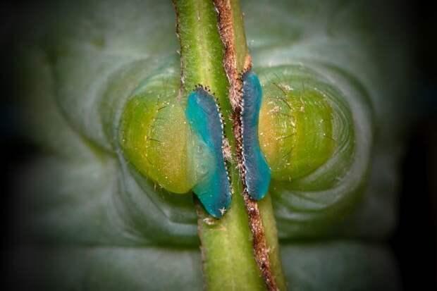 10 любопытных фото для тех, кто никогда не видел, насколько странные ноги у гусениц