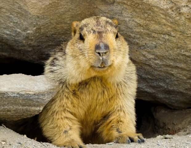10 забавных фото и фактов о животных и растениях , которые интересны всем