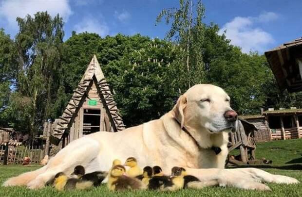 Фотографии, которые доказывают, что собака — настоящий лучик света в нашей непростой жизни